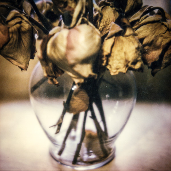 polaroid-glass-flowers027.jpg