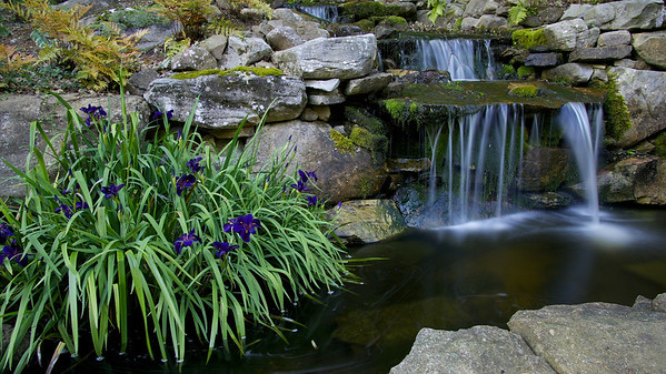 Waterfall flowers