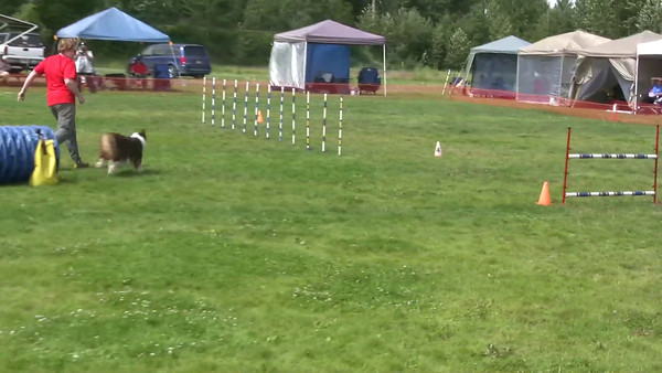Morgan's Agility Debut