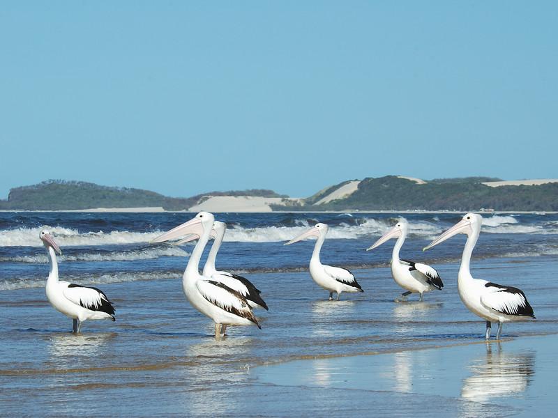 Pelican Committee Meeting.jpg