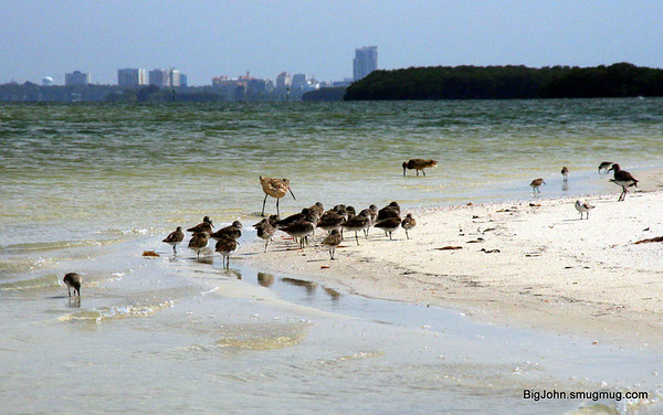 Caladesi Island & Crystal River State park Florida 4-1-12