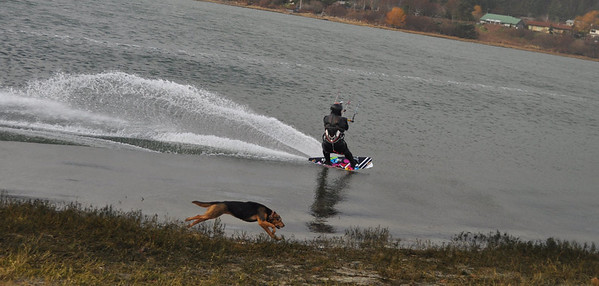 Kiteboarder Meets Dog