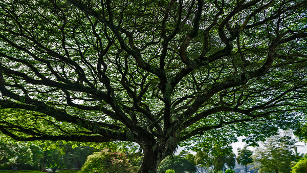 Trees and the Spaces they Support