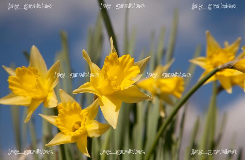 20100329_Flowers18.jpg