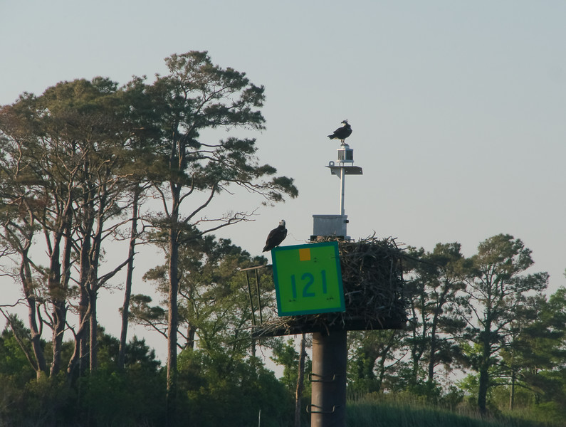 Delux Apartment for this pair of Osprey