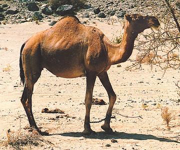 Saudi Arabia 1986-1990