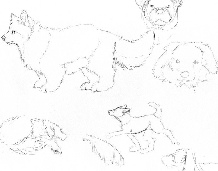 DogSketches.jpg
