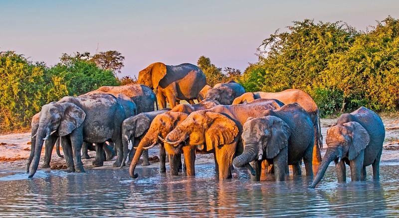 Elephants-20.jpg