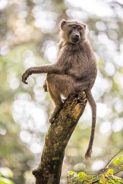 Uganda_T_Chimps-1475.jpg