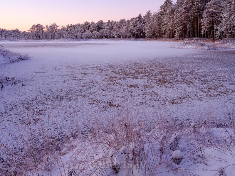 Cenas tīrelis ziemā
