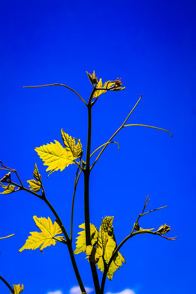 © Gloss Photography Studios-593.jpg