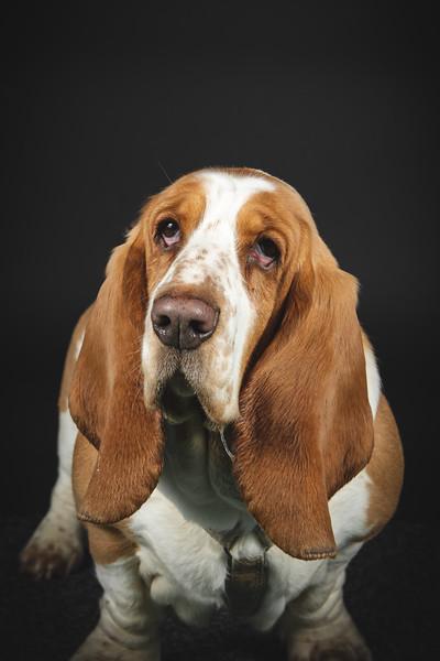 Kerstins hund