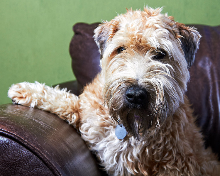 Olive-Couch-IMG_9753_.jpg