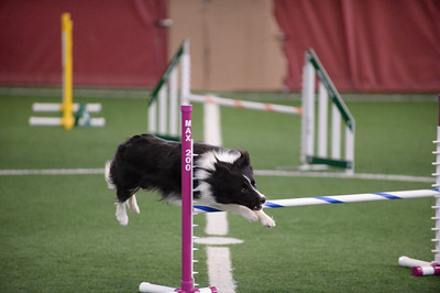 JAG AKC Agility Trial July31-August 2
