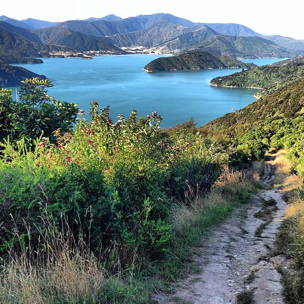 Late afternoon hike atop the Queen Charlotte track, above @Lochmara Lodge