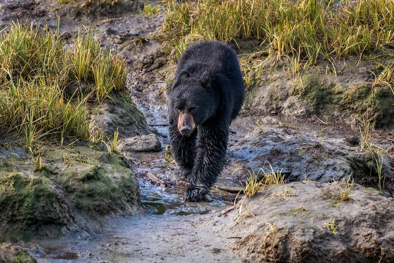 DSC 9640 black bear cub.jpg