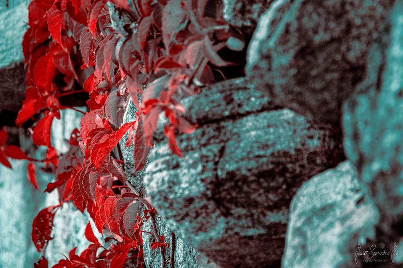 red-wall-bear-mountain-jorge-sarmiento-photo-video-new-jersey-IMG_7195.jpg