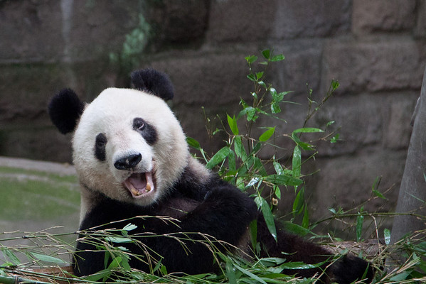 Panda's, Art Gallery