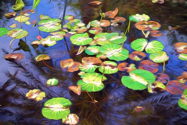 Florida Botanical Gardens with the Minolta 35-70 f/3.5 Macro Lens