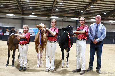 Westerner Championship Dairy Show