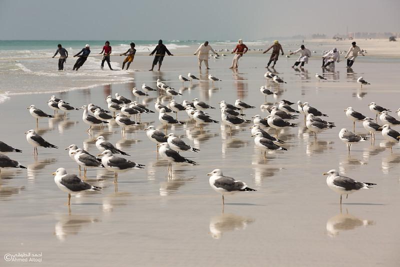 Sardine Season (68)- Dhofar.jpg