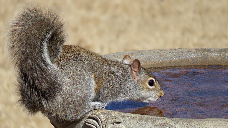 sx50_squirrel_birdbath_191.jpg