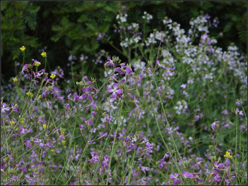 Canyon Park flowers 2010 20.jpg