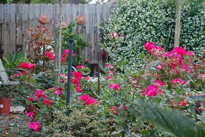 2009 04-26 More backyard