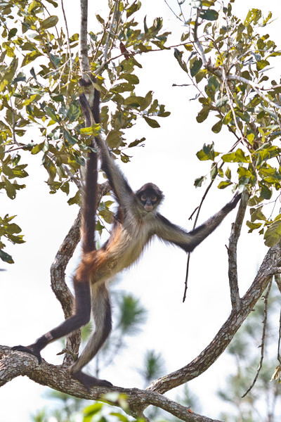 Belize-8.jpg