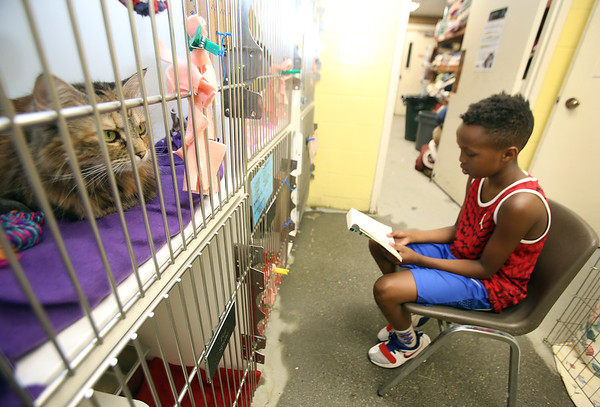 Kids read to animals at Lowell Humane Society 072419