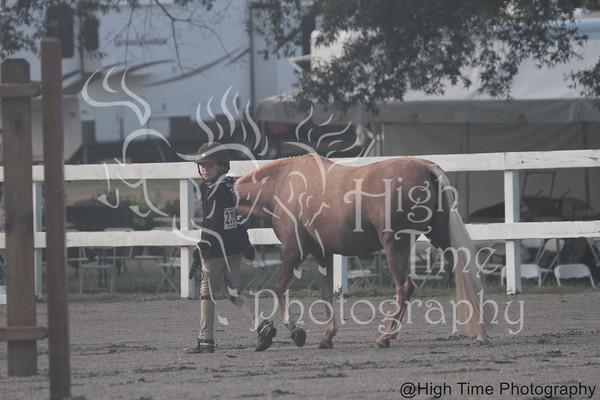000 - Pony Model - Friday Morning