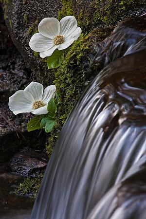 Spring Yosemite 2010