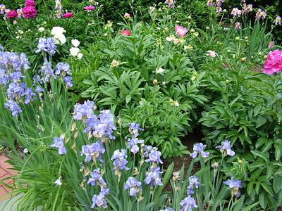 Montclair Iris Gardens 2014