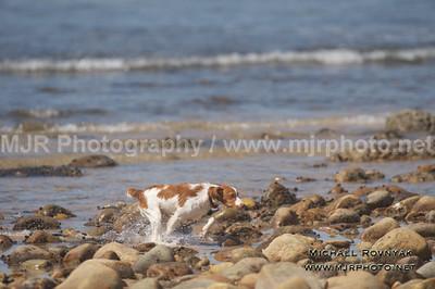 The Beach Scene 06.14.15