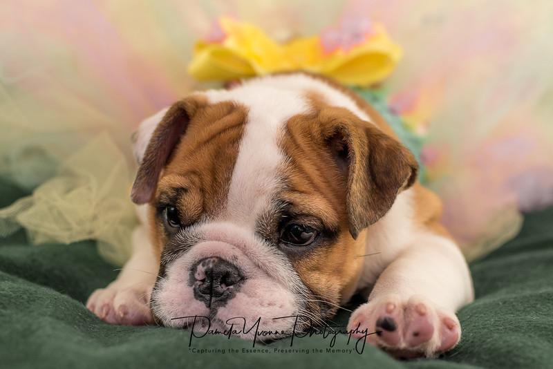 Michelle's newest puppy-5516.JPG