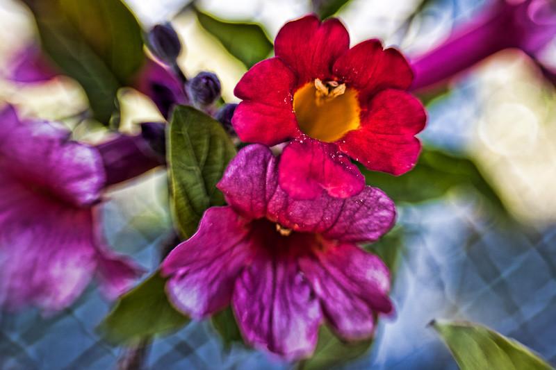 mar 2 - flower.jpg