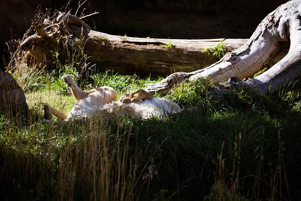 Denver Zoo 10-04-2014