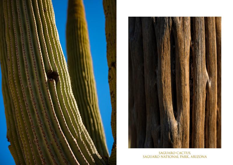 saguaro 2 image.jpg