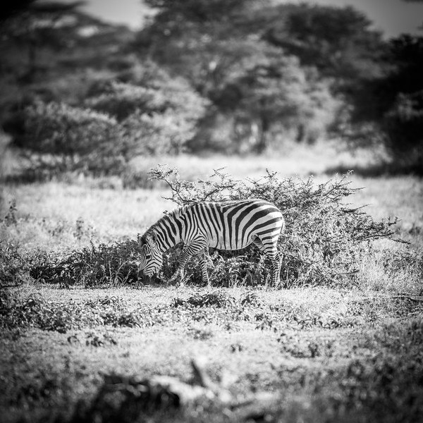 Tanzania_Feb_2018-193.jpg