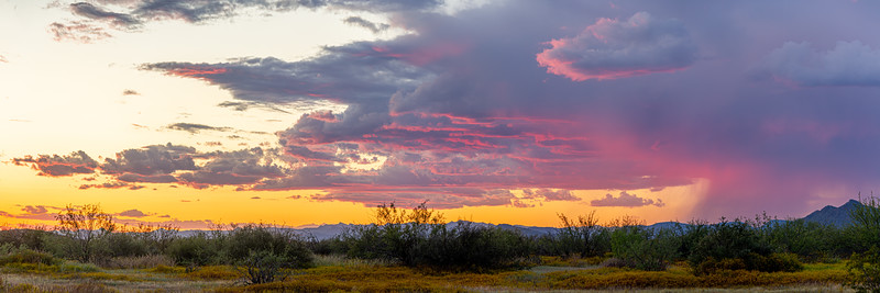 Panoramic image of the Sonoran Desert of Arizona during sunset with distant rain