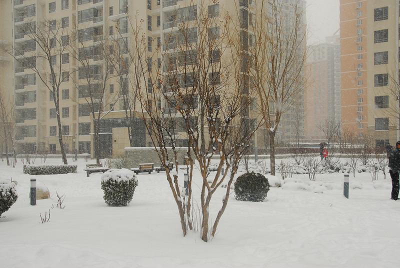 [20100103] 1st 2010 Snow in Beijing (45).JPG