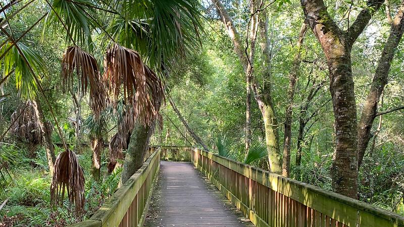 Boardwalk through hardwood forest
