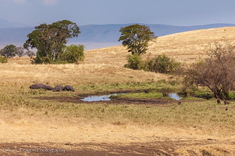 Ngorongoro-39.jpg