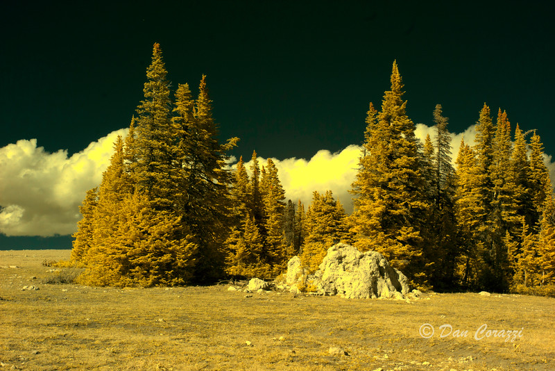 Trees 2a.jpg