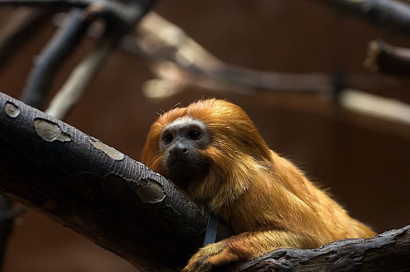Zoo_Trip_34.jpg
