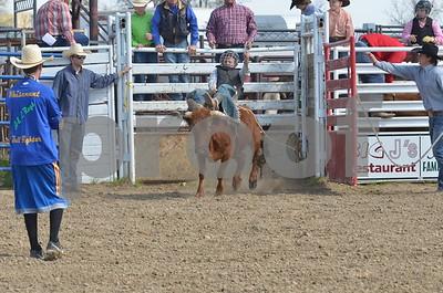 Steers Bareback and Bulls 05-03-15
