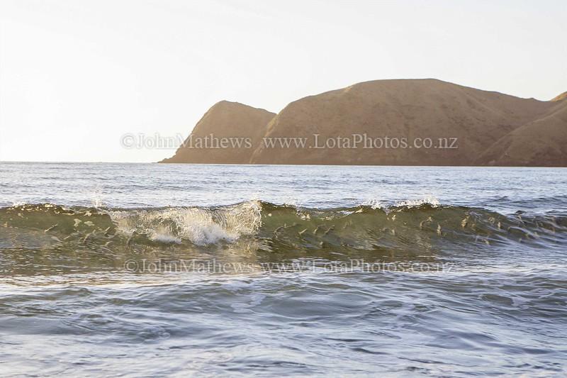 20150227 Fish in wave -_MG_9332  ©John.Mathews@xtra.co.nz WM