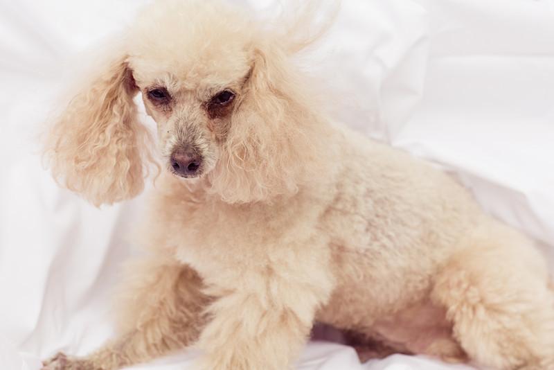 opal mike dogs (1 of 1)-72.jpg