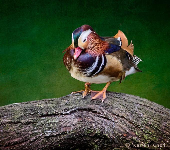 duck small.jpg