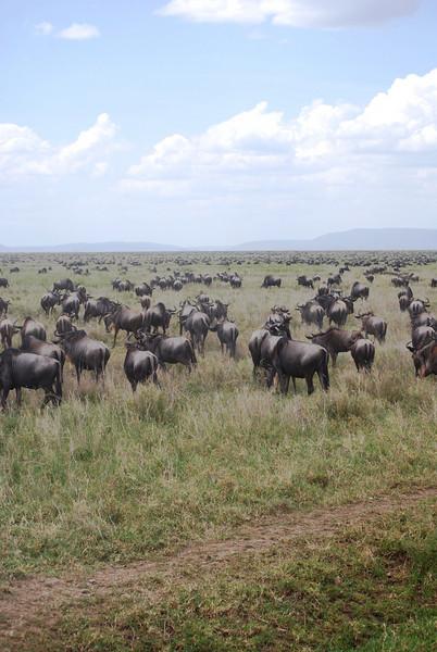 Serengeti (59).JPG